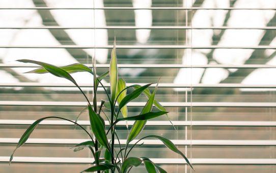 Ring efter gardinbussen og find gardiner der passer til dit hjem